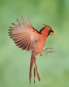 courtesy of Audubon